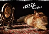 KATZEN Beautys (Wandkalender 2021 DIN A3 quer)