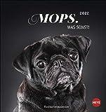 Mops Postkartenkalender 2022 - Tierkalender mit perforierten Postkarten - zum Aufstellen und Aufhängen - mit Monatskalendarium - 16 x 17 cm