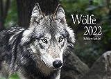 Edition Seidel Wölfe Premium Kalender 2022 DIN A3 Wandkalender Tiere Wald Natur