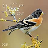 Vögel 2021: Broschürenkalender mit Ferienterminen und Bildern unserer heimischen Vogelwelt. Format: 30 x 30 cm