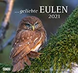 Geliebte Eulen - Kalender 2021 - DuMont-Verlag - Wandkalender - Fotokalender - 37,8 cm x 36 cm