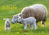 Schafe Kalender 2021, Wandkalender im Querformat (45x33 cm) - Tierkalender