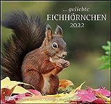 ... geliebte Eichhörnchen 2022 - DUMONT Wandkalender - mit den wichtigsten Feiertagen - Format 38,0 x 35,5 cm