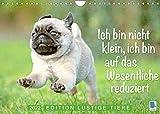 Der Mops: Nicht klein, sondern aufs Wesentliche reduziert. Edition lustige Tiere (Wandkalender 2022 DIN A4 quer)