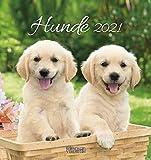 Hunde 2021: aufstellbarer Postkartenkalender