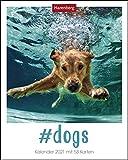 #dogs Postkartenkalender 2021 - Tischkalender mit Wochenkalendarium - 53 perforierte Postkarten zum Heraustrennen - zum Aufstellen oder Aufhängen - Format 12 x 15 cm: Kalender mit 53 Karten
