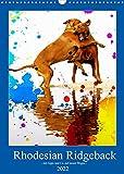 Rhodesian Ridgeback - mit Apps und Co.auf neuen Wegen - (Wandkalender 2022 DIN A3 hoch)