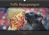 Taffe Begegnungen-Drei Waldkatzen auf Abenteuerreisen (Wandkalender 2021 DIN A3 quer)