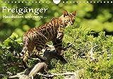 Freigänger - Hauskatzen unterwegs (Wandkalender 2021 DIN A4 quer)