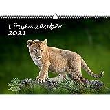 Löwenzauber DIN A3 Kalender für 2021 Löwen und Löwenbabys - Seelenzauber
