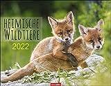Heimische Wildtiere Kalender 2022 - Tierkalender - Wandkalender mit internationalem Monatskalendarium - 12 Farbfotos - 44 x 34 cm