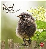 Vögel in unseren Gärten Postkartenkalender 2022 - Tierkalender mit perforierten Postkarten - zum Aufstellen und Aufhängen - mit Monatskalendarium - 16 x 17 cm