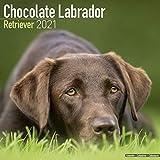 Chocolate Labrador Retriever 2021 Wall Calendar