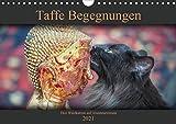 Taffe Begegnungen-Drei Waldkatzen auf Abenteuerreisen (Wandkalender 2021 DIN A4 quer)
