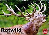 Rotwild. Edle Hirsche, stolze Kühe (Wandkalender 2021 DIN A3 quer)