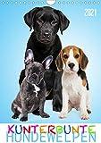 Kunterbunte Hundewelpen (Wandkalender 2021 DIN A4 hoch)