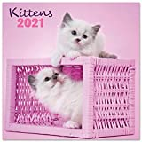 Erik Wandkalender Chantrenne Katzen - Kalender 2021 für 16 Monate