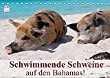 Schwimmende Schweine auf den Bahamas! (Tischkalender 2022 DIN A5 quer)