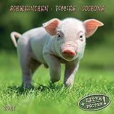 Piggies/Schweinchen 2021: Kalender 2021 (Artwork Edition)