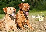 Rassehunde (Wandkalender 2021 DIN A4 quer)