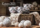 Edition Seidel Katzen Premium Kalender 2021 DIN A3 Wandkalender Katzenkalender