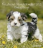 Niedliche Hundekinder 2021 - Wand-Kalender - Tier-Kalender - 30x34: Dinky Dogs