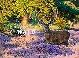 Tierwelt Wald Kalender 2021, Wandkalender im Querformat (45x33 cm) - Tierkalender mit heimischen Wildtieren