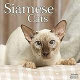 Siamese Cats - Siam-Katzen 2022 - 16-Monatskalender: Original Avonside-Kalender [Mehrsprachig] [Kalender] (Wall-Kalender)