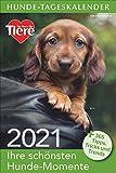 Hunde-Tageskalender 2021