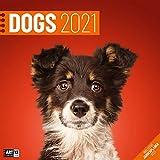 Dogs 2021, Wandkalender / Broschürenkalender im Hochformat (aufgeklappt 30x60 cm) - Hunde-Kalender mit Monatskalendarium zum Eintragen
