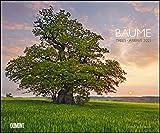 Bäume 2021 – Wandkalender 58,4 x 48,5 cm – Spiralbindung