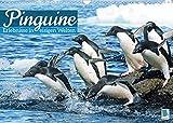 Pinguine: Gehupft wie gesprungen - Edition lustige Tiere (Wandkalender 2022 DIN A3 quer)