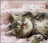 times&more Katzen Bildkalender Kalender 2021