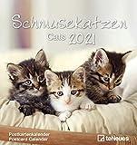 ROLLER Kalender 2021 - Schmusekatzen - 16x17 cm