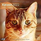Katzen 2022, Wandkalender / Broschürenkalender im Hochformat (aufgeklappt 30x60 cm) - Geschenk-Kalender mit Monatskalendarium zum Eintragen