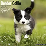 Border Collie Puppies - Border Collie Welpen 2022 - 16-Monatskalender: Original Avonside-Kalender [Mehrsprachig] [Kalender] (Wall-Kalender)
