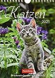 Katzen Kalender 2021: Wochenkalender mit Zitaten