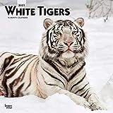 White Tigers - Weiße Tiger 2021 - 16-Monatskalender: Original BrownTrout-Kalender [Mehrsprachig] [Kalender] (Wall-Kalender)