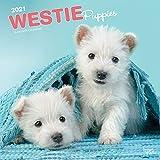 West Highland White Terrier Puppies - West Highland White Terrier Welpen 2021 - 16-Monatskalender mit freier DogDays-App: Original BrownTrout-Kalender [Mehrsprachig] [Kalender] (Wall-Kalender)