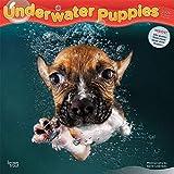 Underwater Puppies – Welpen unter Wasser 2020 - 16-Monatskalender: Original BrownTrout-Kalender [Mehrsprachig] [Kalender] (Wall-Kalender)