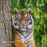 Tiger 2021 - Broschürenkalender - Wandkalender - mit herausnehmbarem Poster - Format 30 x 30 cm