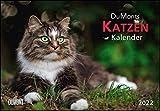 DUMONTS Katzenkalender 2022 - Broschürenkalender - Wandkalender - mit Schulferienterminen - Format 42 x 29 cm: mit kurzweiligen Katzengeschichten