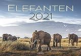Elefanten 2021: Sanfte Riesen der Wüste