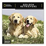 National Geographic Golden Retrievers 2021 Wall Calendar