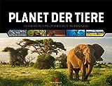 Planet der Tiere, Lebensräume rund um den Globus, Kalender 2022, Wandkalender im Querformat (54x42 cm) - Hochwertiger Tierkalender, Wildtiere