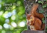 Edition Seidel Waldtiere Wildtiere Premium Kalender 2021 DIN A3 Wandkalender Tiere im Wald