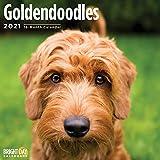 2021 Goldendoodles Wandkalender von Bright Day, 30,5 x 30,5 cm, süßer Hund Welpe Pudel Golden Retriever