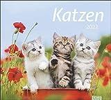 Katzen Bildkalender 2022 - times&more Tier-Kalender - Wandkalender mit Monatskalendarium - 30 x 27 cm