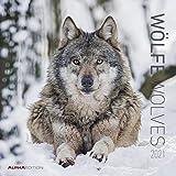 Wölfe 2021 - Broschürenkalender 30x30 cm (30x60 geöffnet) - Wolves - Bild-Kalender - Wandplaner - mit Platz für Notizen - Alpha Edition