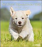 Niedliche Hundekinder 2022 - Wand-Kalender - Tier-Kalender - 30x34: Dinky Dogs